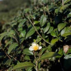 🔴拜訪南投茶產區 🍵覓好茶