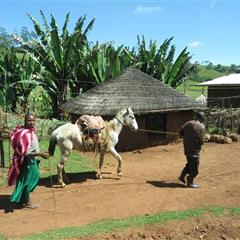 【衣索比亞】耶加雪菲 沃卡村 果丁丁 水洗 G1
