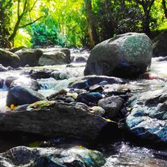 【哥斯大黎加】聖伊格納西歐莊園 H3 雙重發酵水洗